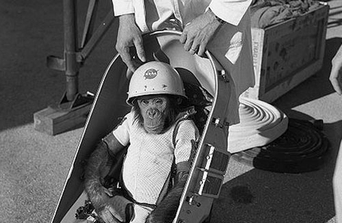 Picture of monkey preparing for spaceflight